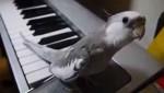 همخوانی با صدای پیانو توسط عروس هلندی