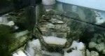 نمونه آبشار در آکواریوم – ۲