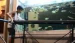 تغذیه کردن پیکاک باس با ماهیان زنده