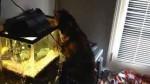 عاقبت خوردن آب از آکواریوم اسکار