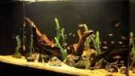 آکواریوم جمعی با گونه های مختلف تترا