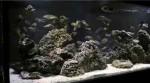 آکواریوم با گونه های مختلف تروفئوس
