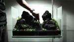 راه اندازی آکواریوم گیاهی با محصولات ADA – بخش دوم