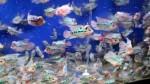 اکواریوم پر از ماهی فلاور