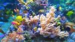 ماهیان زیبای آب شور