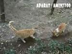 چقد گربه!!!