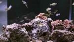 آکواریوم با گونه های آفریقایی دریاچه تانگانیا