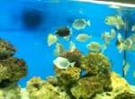 اکواریوم ماهی اسکات
