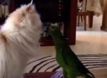 مزاحمت طوطی ها برای گربه ها