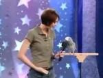 طوطی معروف انیشتین در برنامه پت استار انیمال پلنِت – ۲۰۰۴