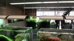 گالری بی نظیر تاکاشی آمانو در ژاپن