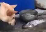 تلاش یک سگ برای نجات ماهی ها