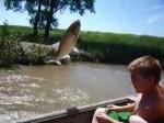 پرش ماهی ها در رودخانه ایلینوی به هنگام عبور قایق