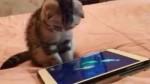 بامزه: تلاش گربه برای شکار ماهی