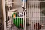 باز کردن در قفس توسط این طوطی!
