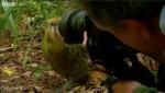 بامزه: کتک خوردن عکاس از طوطی کاکاپو!
