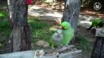 ماچ و بوسه های این طوطی!