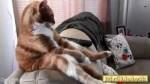 بامزههای دنیای حیوانات