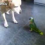 بامزه: طوطی ها در مقابل سگ ها