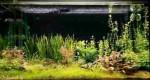 تولید اُکسیژن توسط گیاهان آکواریومی