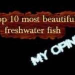 10 ماهی زیبا