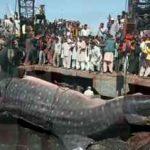 غول پیکر ترین ماهی های دیده شده