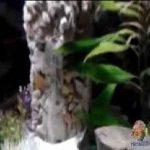 چهار نمونه آبشار در آکواریوم