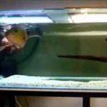 چند شکار شگفت انگیز توسط ماهی ها