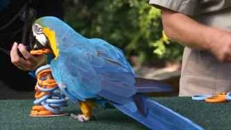 parrot_342k_onlypet-ir_embed