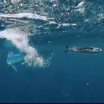 شکارچیان ماهی پرنده در داخل و خارج از آب