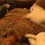 بامزه: تقابل طوطی ها و سگ ها