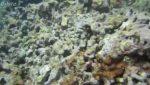 استتار! قادر به تشخیص ماهی داخل ویدیو هستید؟