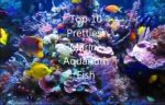 ده ماهی برتر ابشور