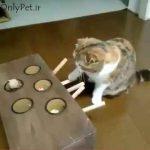 بازی گربه با یه اسباب بازی جالب