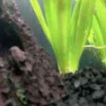 نگاه متفاوت به داخل آکواریوم از زیر آب!