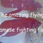 پرش های شگفت انگیز ماهی فایتر