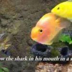 به طوطی ماهی هم نمیشه اعتماد کرد!