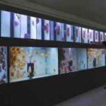 سالن پرورش دیسکس در اروپا: تغذیه کردن دیسکس ها