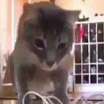 بامزه های دنیای گربه ها