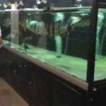 تغذیه کردن ماهیهای غول پیکر