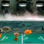 فوتبال ماهیان گلدفیش