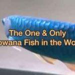 10 گونه ی کمیاب آروانای آسیایی