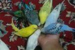 مرغ عشق های من