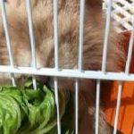 خرگوش لوپ من