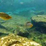 نبرد ماهی مولی باله بادبانی