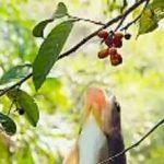 پرش ماهی برای خوردن میوه در شاخهٔ درخت