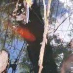 گلدفیش و ماهی های بومی